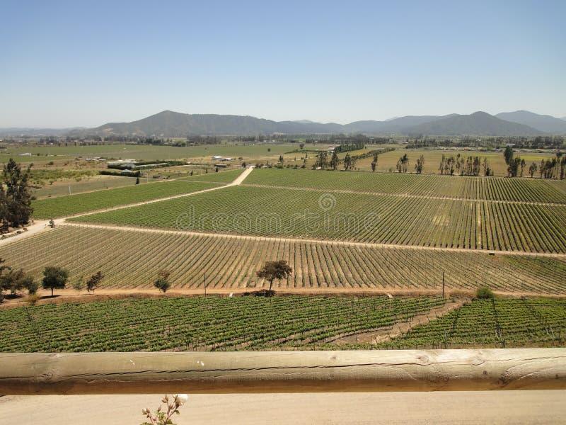 Chilensk vingård royaltyfria foton