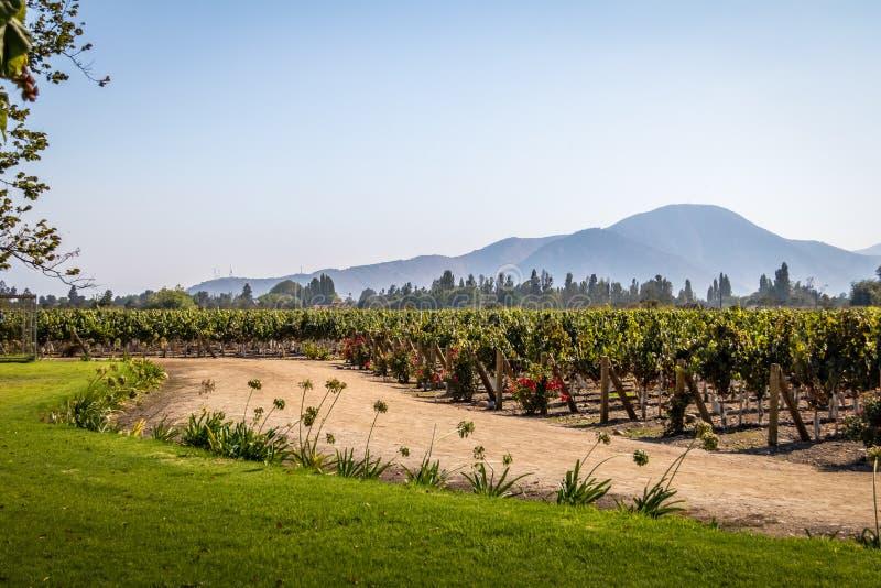 Chilensk vingård - Santiago, Chile royaltyfri foto
