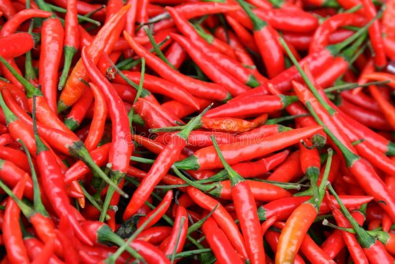 Chiles calientes imagen de archivo libre de regalías