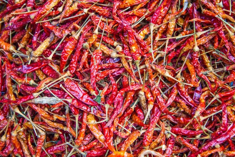 Chiles secados. foto de archivo