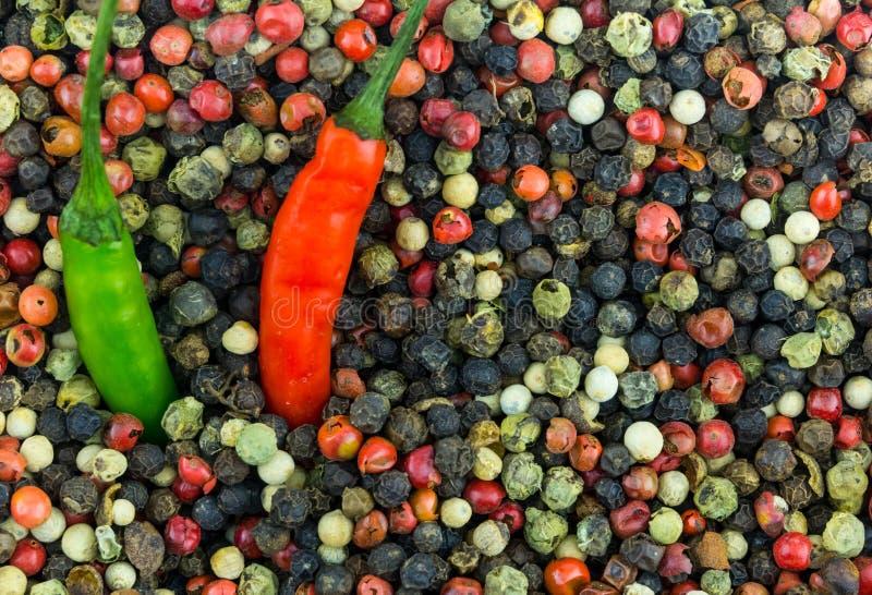 Chili 2 длинных перцев пряный глубоко в горохов белого перца черноты смешивания комплекта космосе экземпляра дизайна красных мало стоковое фото rf