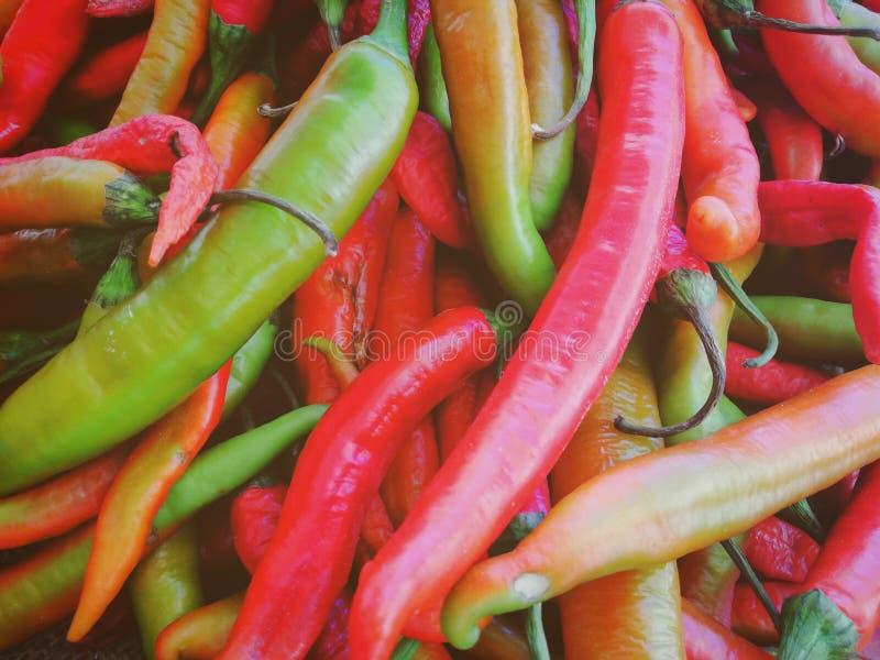 Chili royaltyfri foto