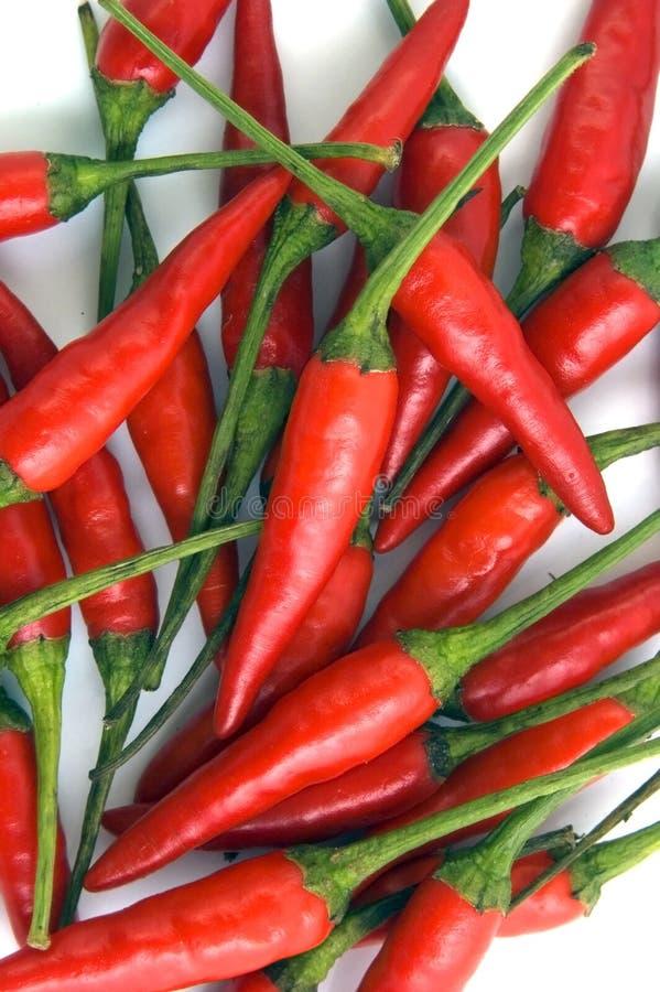 chili obraz stock