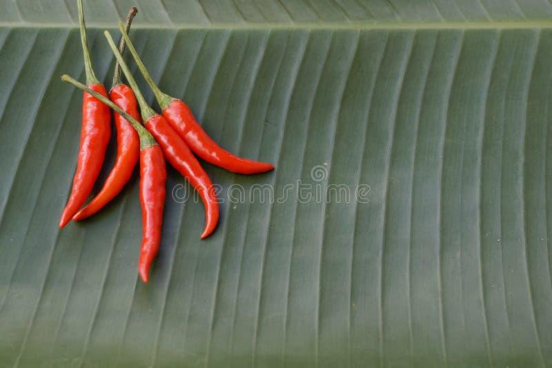 Chili Background végétal photographie stock
