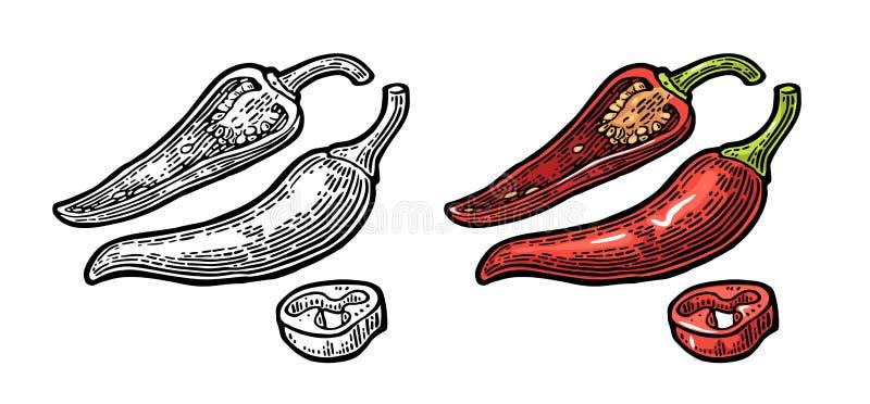 chili Chili cały, połówka i plasterek, Wektorowy rocznik grawerujący ilustracji