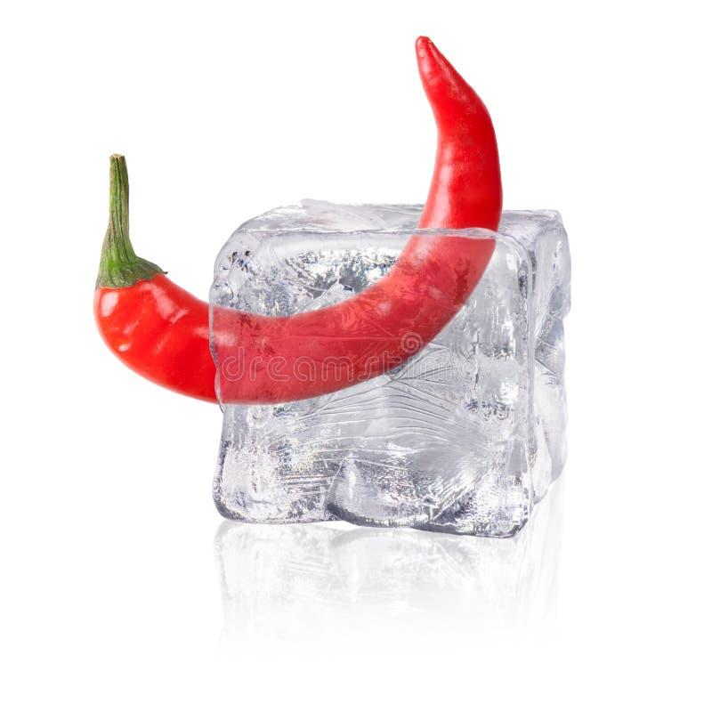 Chili i en iskub arkivbild