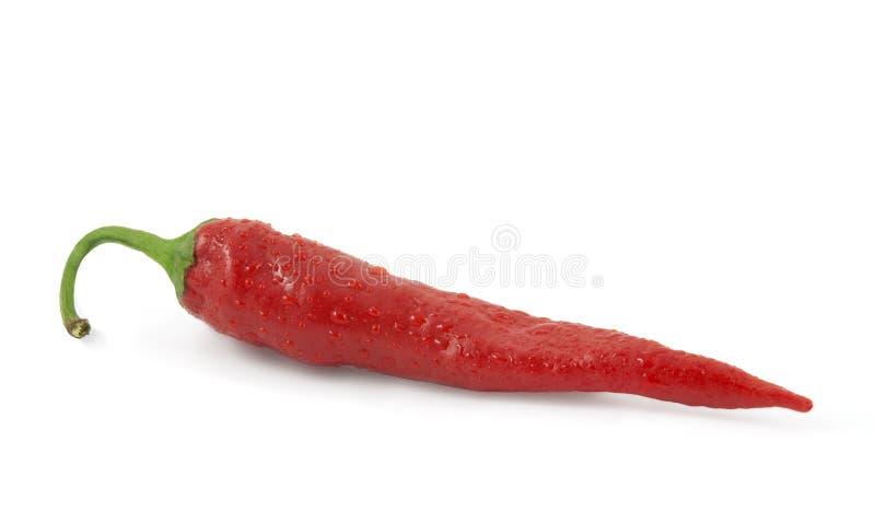 chili opuszcza gorącego pieprzu czerwoną wodę fotografia royalty free