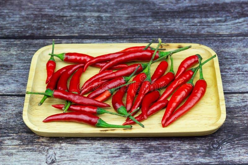 Chili - pepparv?xterna till naturen fotografering för bildbyråer