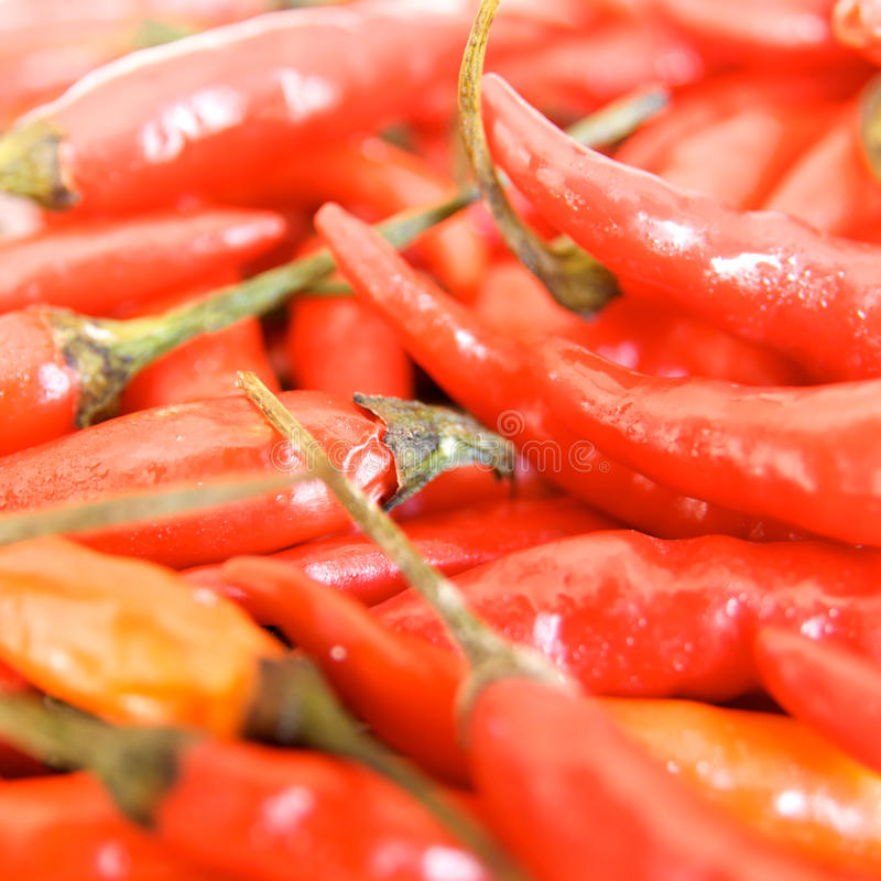 Free Chili Pepper Stock Photography - 13687872