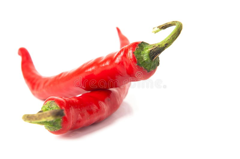 Chili Pepper foto de stock
