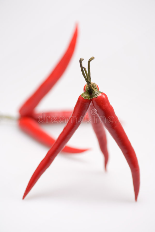 Chili Pepper. Two bundles of Chili Pepper, soft royalty free stock photography
