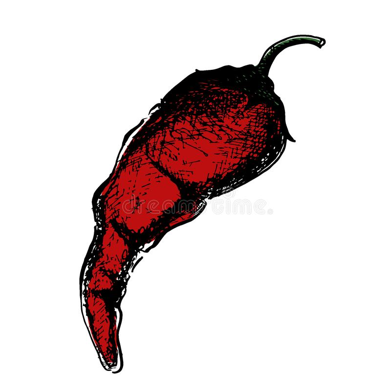 Chili Pepper hand drawn vector illustration. Vegetable artistic style object. Isolated hot spicy mexican pepper, sliced. And crushed pieces, seed. Detailed royalty free illustration