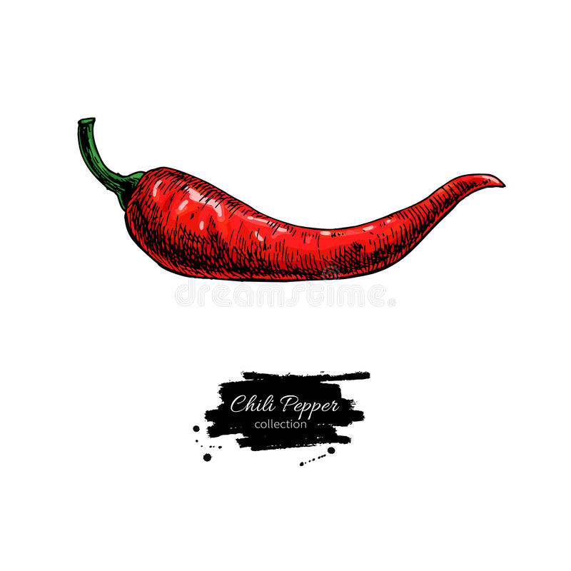 Chili Pepper hand drawn vector illustration. Vegetable object. hot spicy. Mexican flavor. Detailed vegetarian food drawing. Eco Farm market product. Red Paprika royalty free illustration