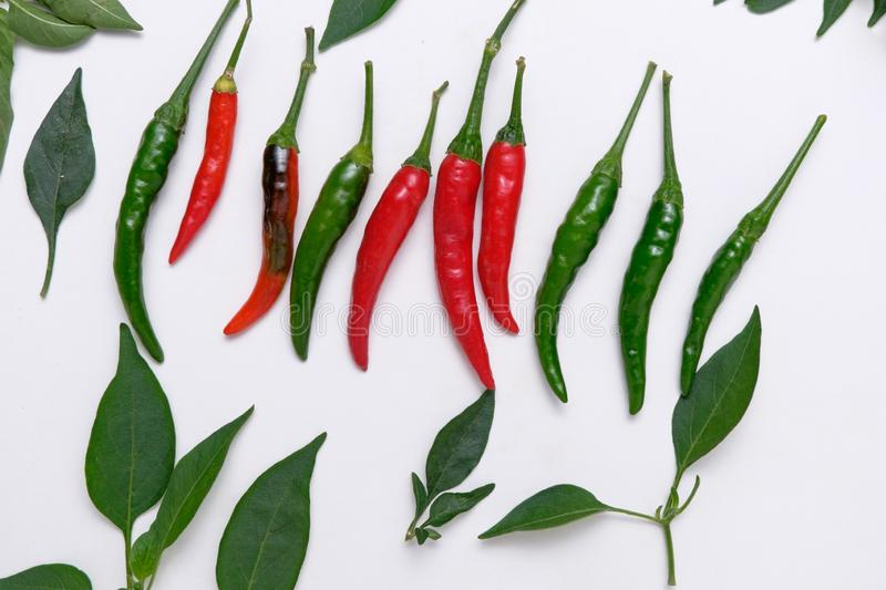 Chili pepper and leaf on white background stock photos