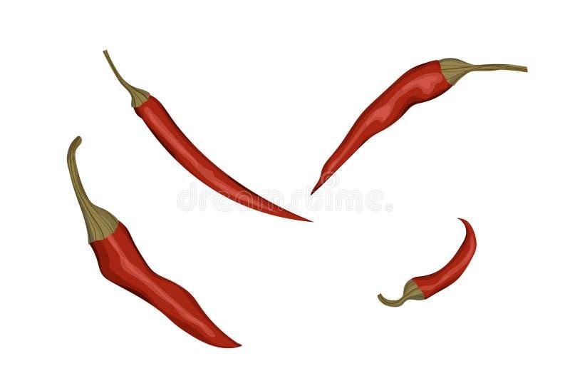 Chili Pepper rojo stock de ilustración