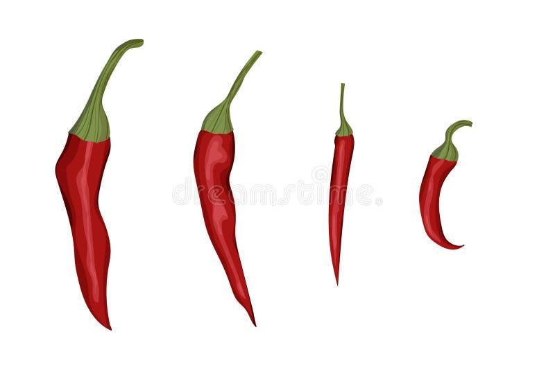 Chili Pepper rojo libre illustration