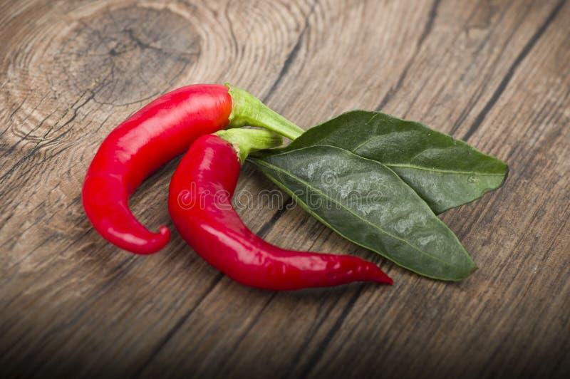 Chili Pepper rosso fotografia stock libera da diritti