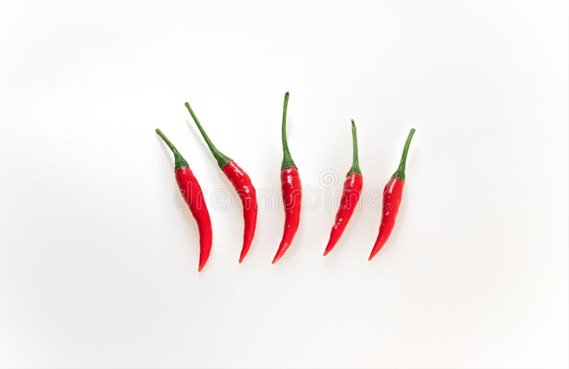 Chili Pepper On White Background rovente Fila orizzontale dei peperoncini, vista superiore Peperoni maturi rossi con i gambi verd fotografia stock