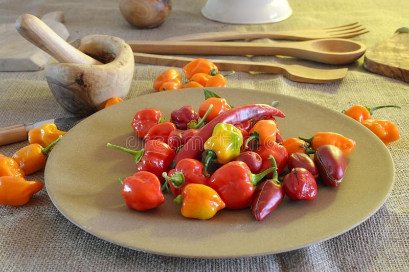 Chili Peppers. Beautiful and colored chili peppers on a wooden base stock photo