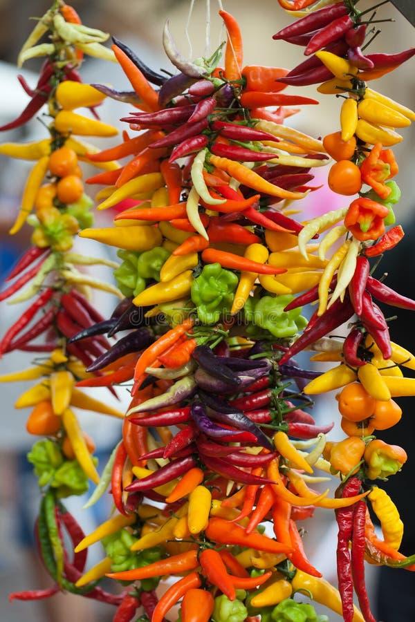 Chili Peppers chaud multicolore photo stock