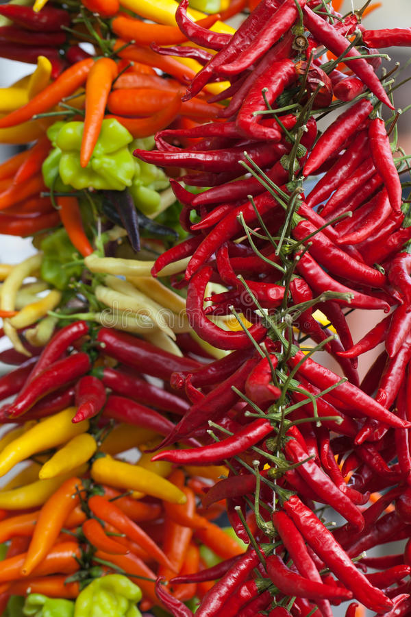Chili Peppers chaud multicolore photo libre de droits