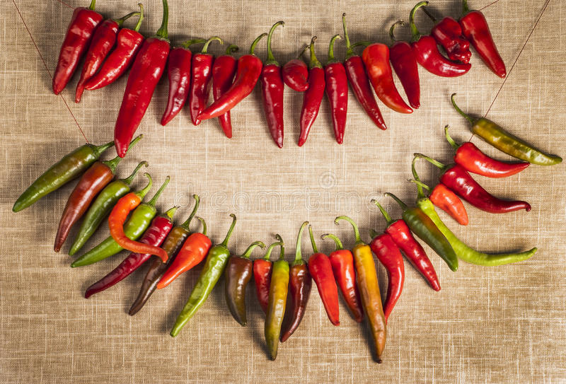 rows of Chili Peppers royalty free stock photos