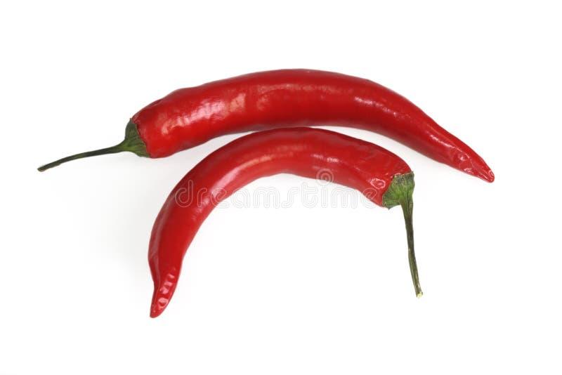 chili pieprzu czerwień fotografia royalty free