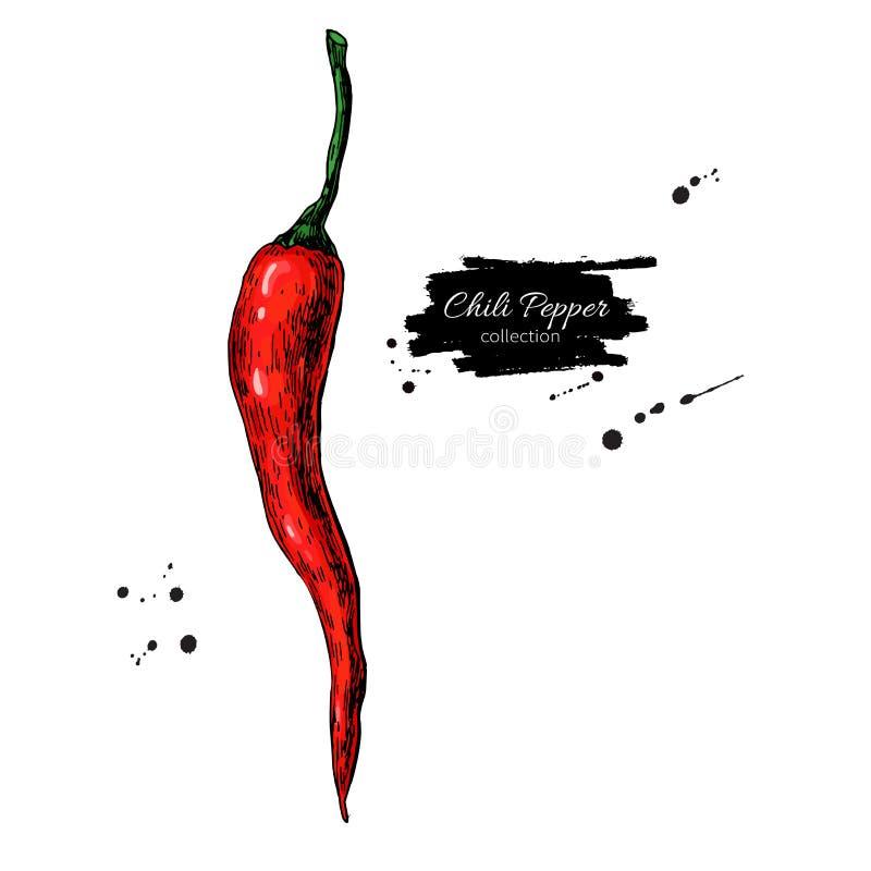 Chili pieprzu ręka rysująca wektorowa ilustracja Jarzynowy przedmiot Odosobniony gorący korzenny meksykanin royalty ilustracja