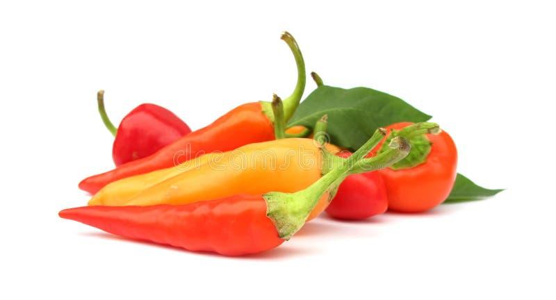 Chili pieprzy paprykę obraz stock
