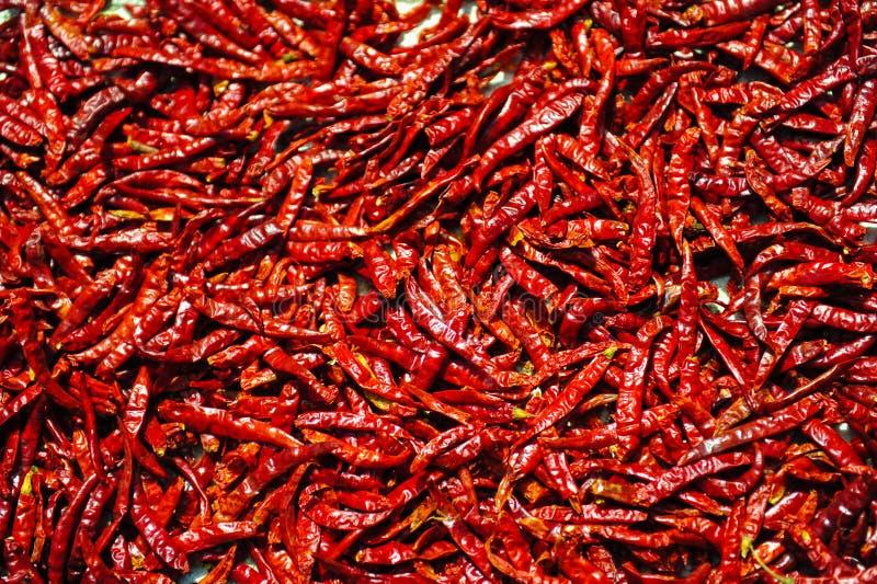 Chili royalty free stock photos