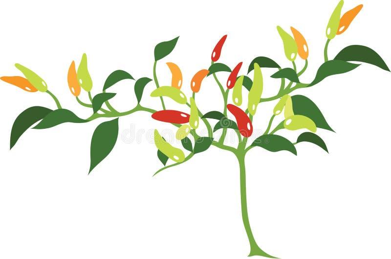 Chili rośliny Wektorowa ikona i ilustracja ilustracja wektor