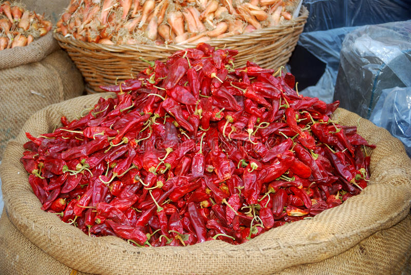 Chili, Srinagar, Kashmir, India royalty free stock photos