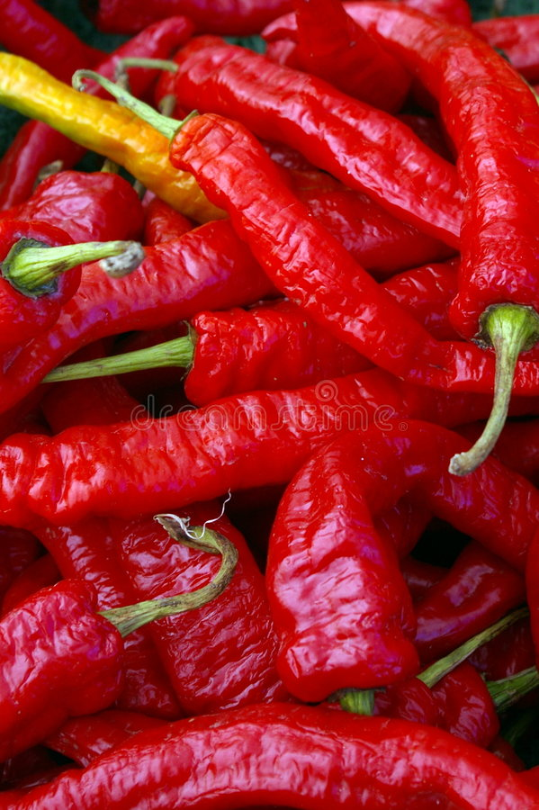 chilien pepprar red arkivfoto