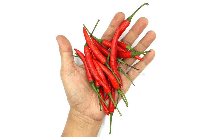Chilies. male hands holding a handful of fresh harvested red hot peppers isolated on white background royalty free stock image
