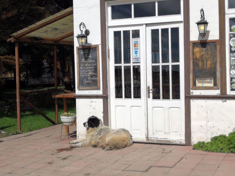 Chilijczyka stylu dom z strzeżenie psa chile zdjęcia royalty free
