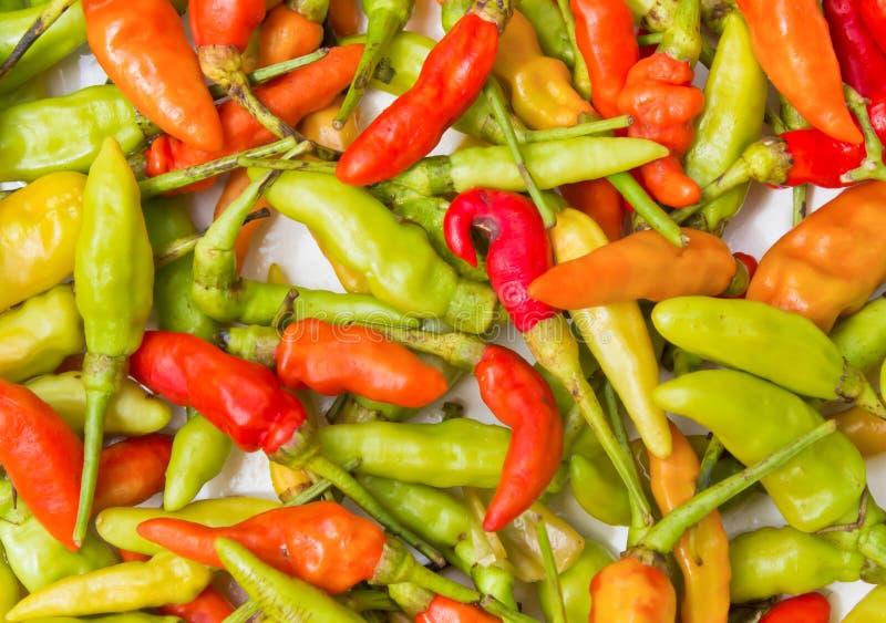 Chilis. Thai colorful chilis on white background stock images