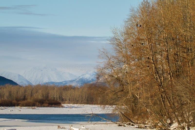 Chilkat河的风景观点 库存照片
