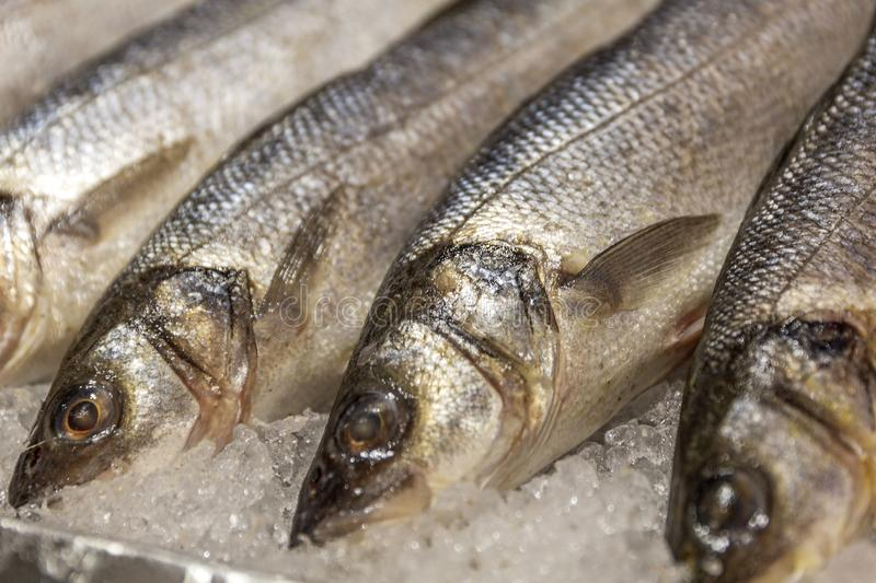 Chilled fish on ice in the store. Close-up. Horizontal royalty free stock image