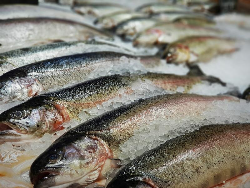 chilled trout on ice in the store stock image