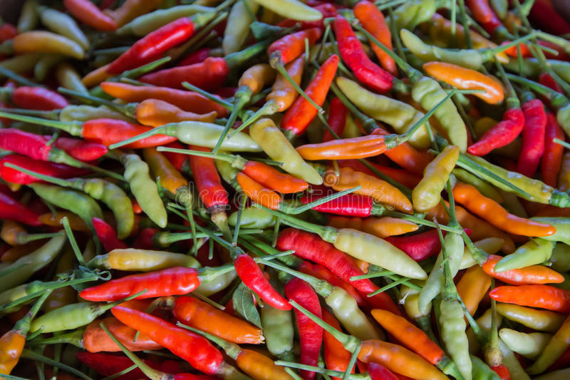 Chilli. Many multi-colored pepper paste heap royalty free stock image