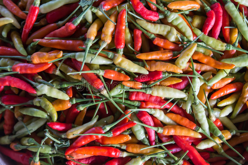 Chilli. Many multi-colored pepper paste heap royalty free stock photography