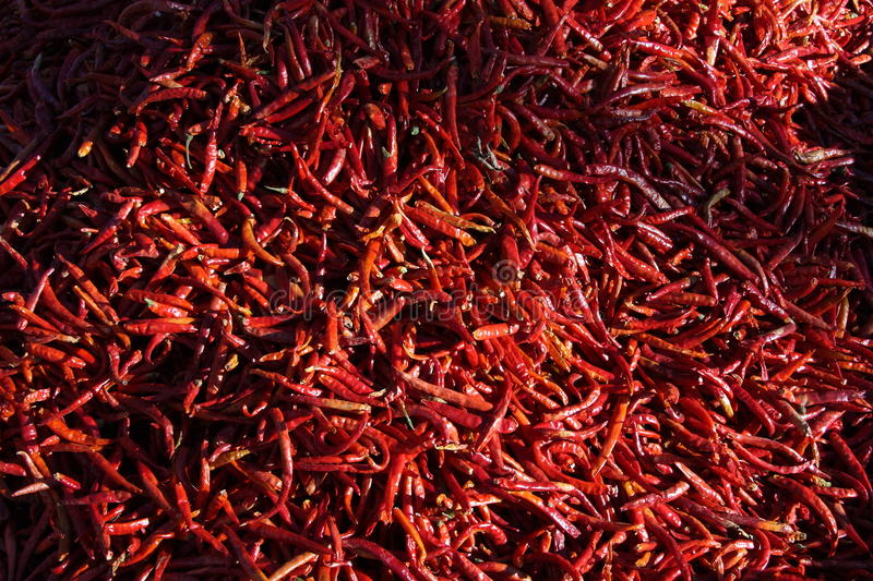 Chilli pepper royalty free stock photography