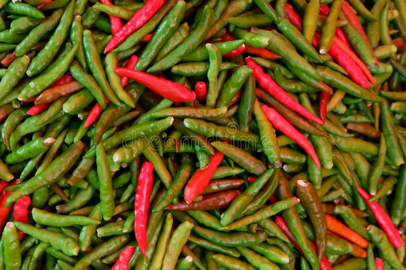 Chilli vegetable pattern for background. royalty free stock images