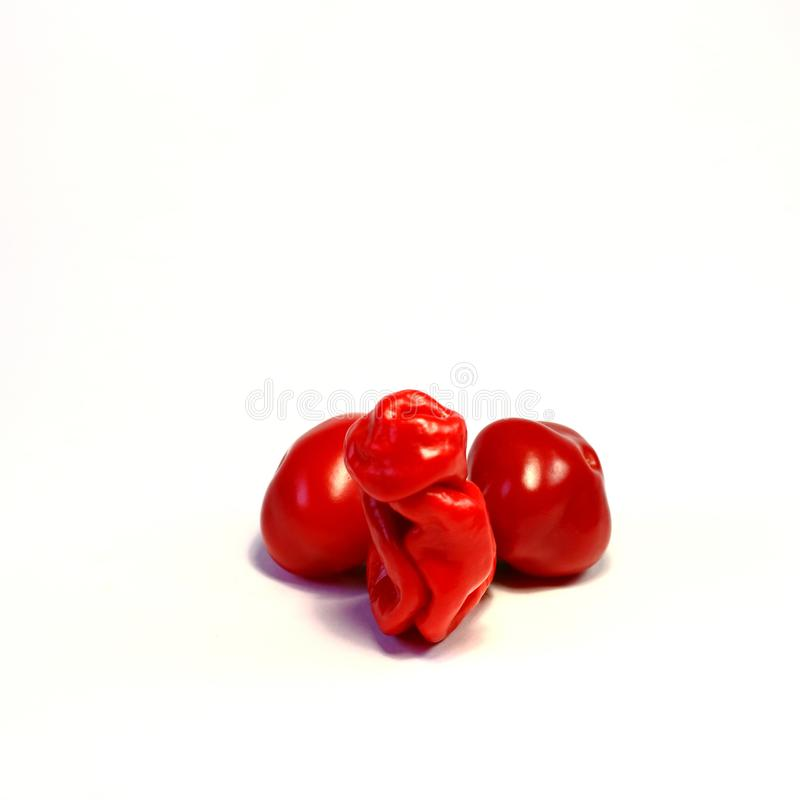 Chilli Willy pepper as erection penis royalty free stock photo