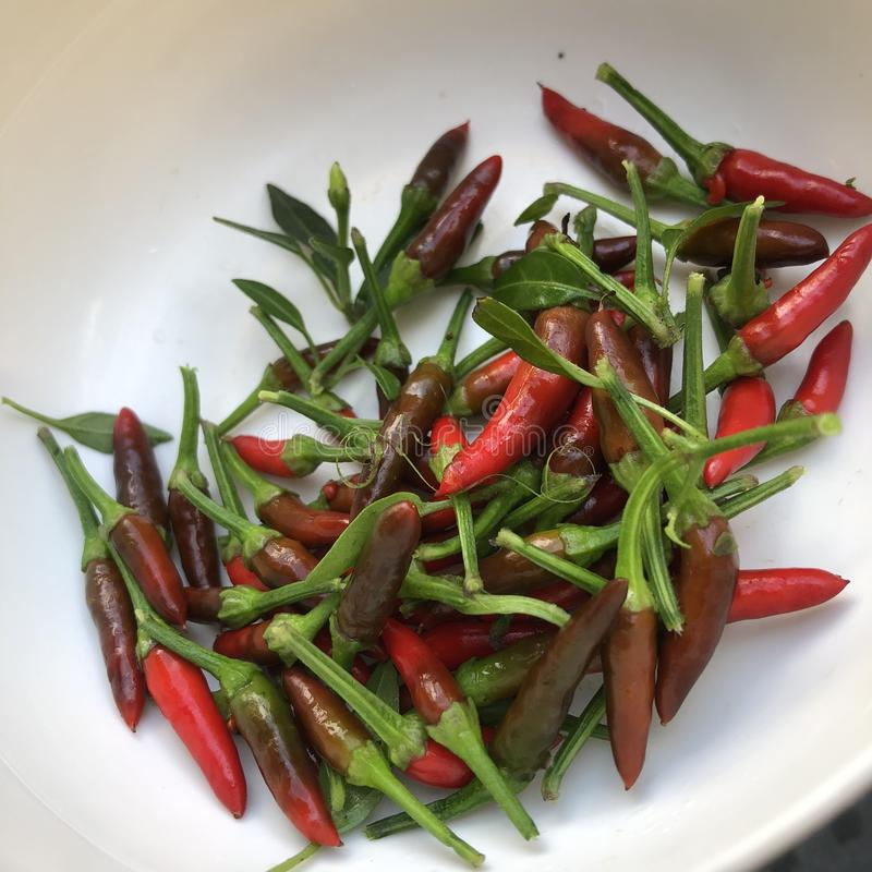 Chillies. Local chillies grown in Asia. Use largely in Malaysian dishes for better test stock image