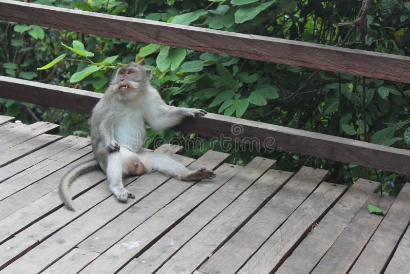 Chillin małpa obraz stock