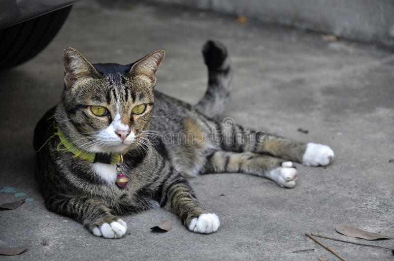 Chilling cat in the town. (Cat in thailand) stock photo