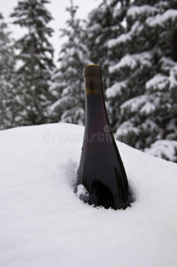 Download Chilling Wine stock image. Image of bottle, evergreen - 23423765