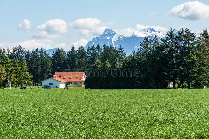 CHILLIWACK, CANADA - APRIL 20, 2019: Beautiful view green field at farm with house and mountains in british columbia. Summer forest countryside grass landscape royalty free stock photos