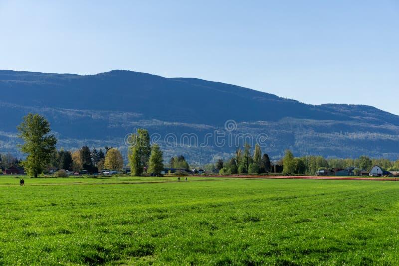 CHILLIWACK, CANADA - 20 APRILE 2019: grande campo verde all'azienda agricola in Columbia Britannica al giorno di molla soleggiato fotografie stock libere da diritti